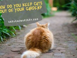 How do youKeep Cats Out of Your Garden