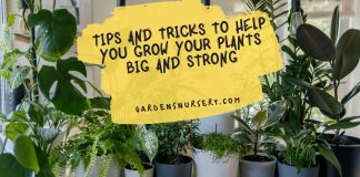 Tips And Tricks To Help You Grow Your Plants Big And Strong