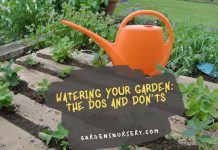 Watering Your Garden The Dos and Don'ts