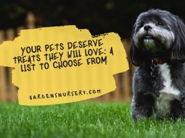 Your Pets Deserve Treats They Will Love A List To Choose From
