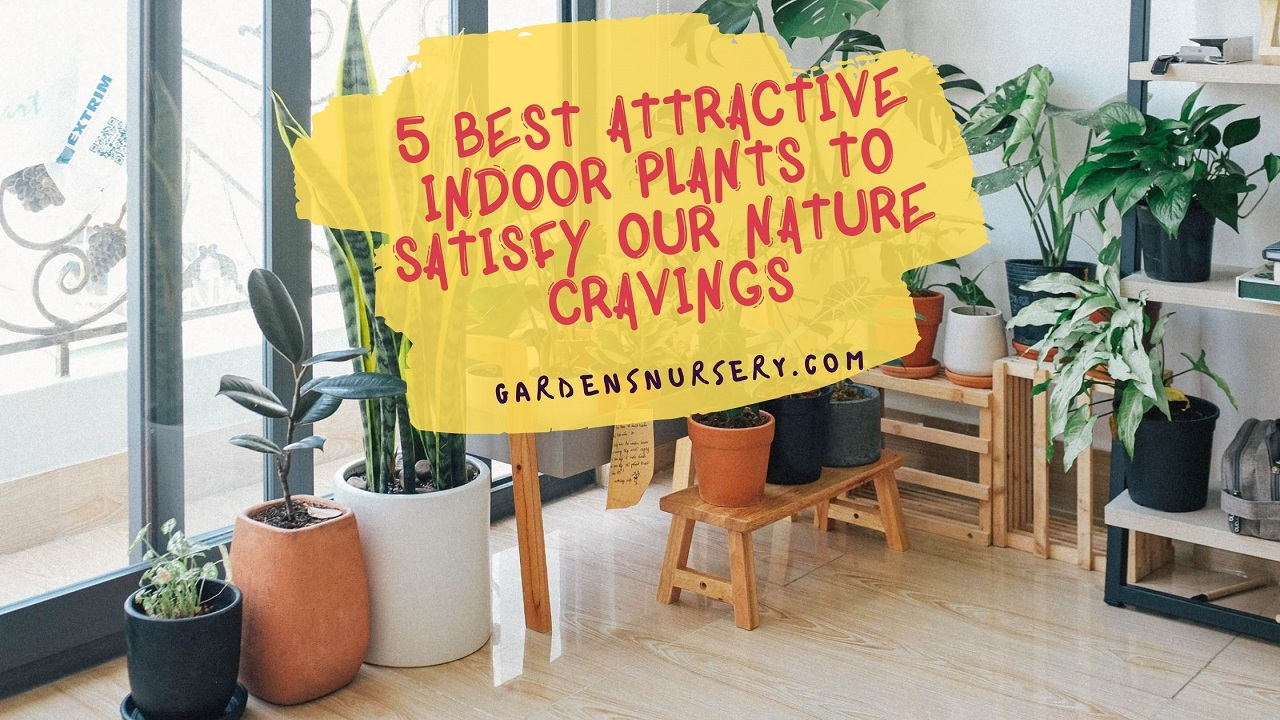5 Best Attractive Indoor Plants To Satisfy Our Nature Cravings