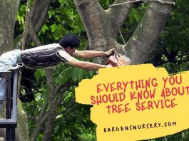 Everything you Should Know About Tree Service