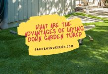 What Are the Advantages of Laying Down Garden Turf?