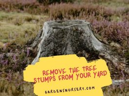 Why It's Important To Remove The Tree Stumps From Your Yard