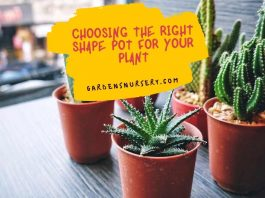 Choosing the Right Shape Pot for Your Plant