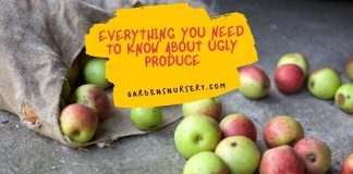 Everything You Need to Know About Ugly Produce