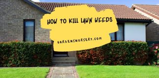How to Kill Lawn Weeds