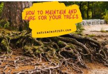 How to Maintain and Care for Your Trees