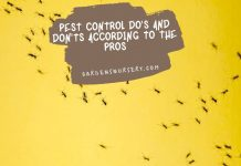 Pest Control Do's And Don'ts According To The Pros