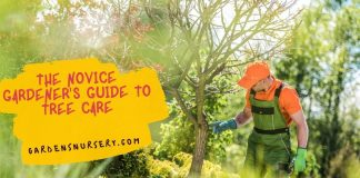 The Novice Gardener's Guide To Tree Care