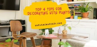 Top 4 Tips For Decorating With Plants