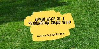 Advantages of a Pennington Grass Seed