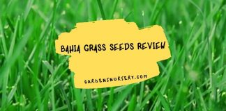Bahia Grass Seeds Review