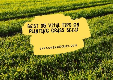 Best 05 Vital Tips on Planting Grass Seed