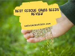 Best Fescue Grass Seeds Review