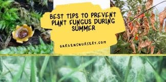 Best Tips to Prevent Plant Fungus During Summer