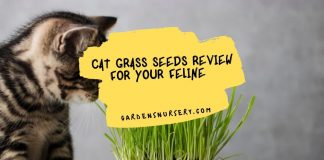 Cat Grass Seeds Review For Your Feline
