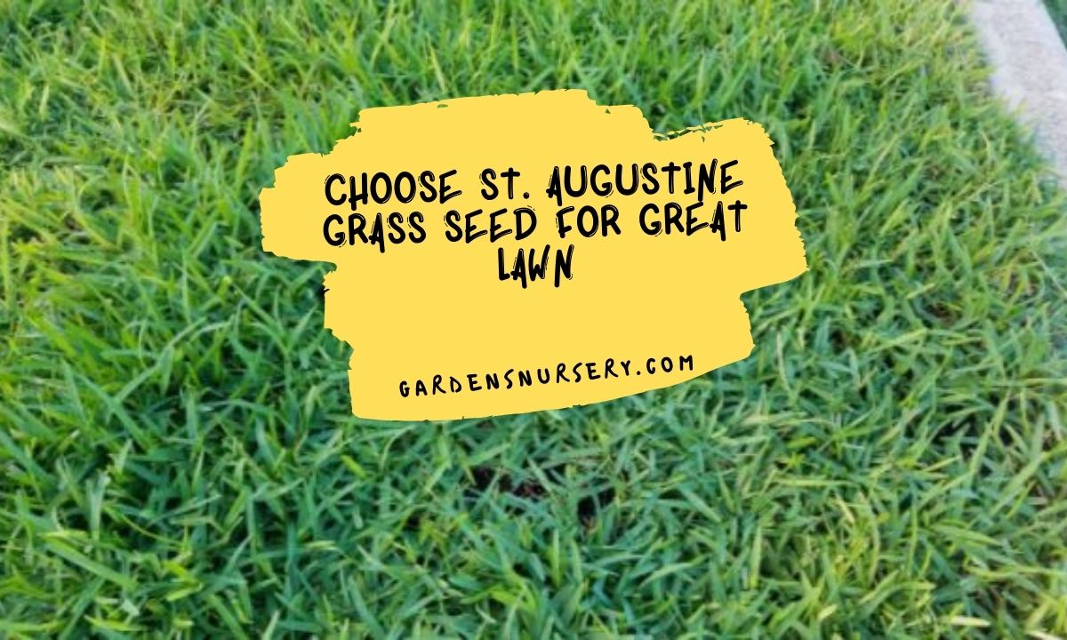 Choose St. Augustine Grass Seed for Great Lawn
