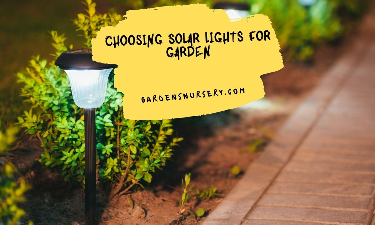 Choosing Solar Lights For Garden
