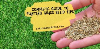 Complete Guide to Planting Grass Seed Tips