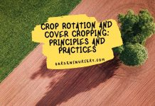 Crop Rotation and Cover Cropping Principles and Practices