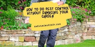 How To Do Pest Control Without Damaging Your Garden