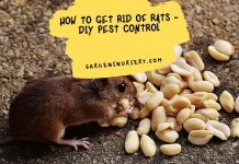 How To Get Rid Of Rats - DIY Pest Control