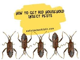 How to Get Rid Household Insect Pests