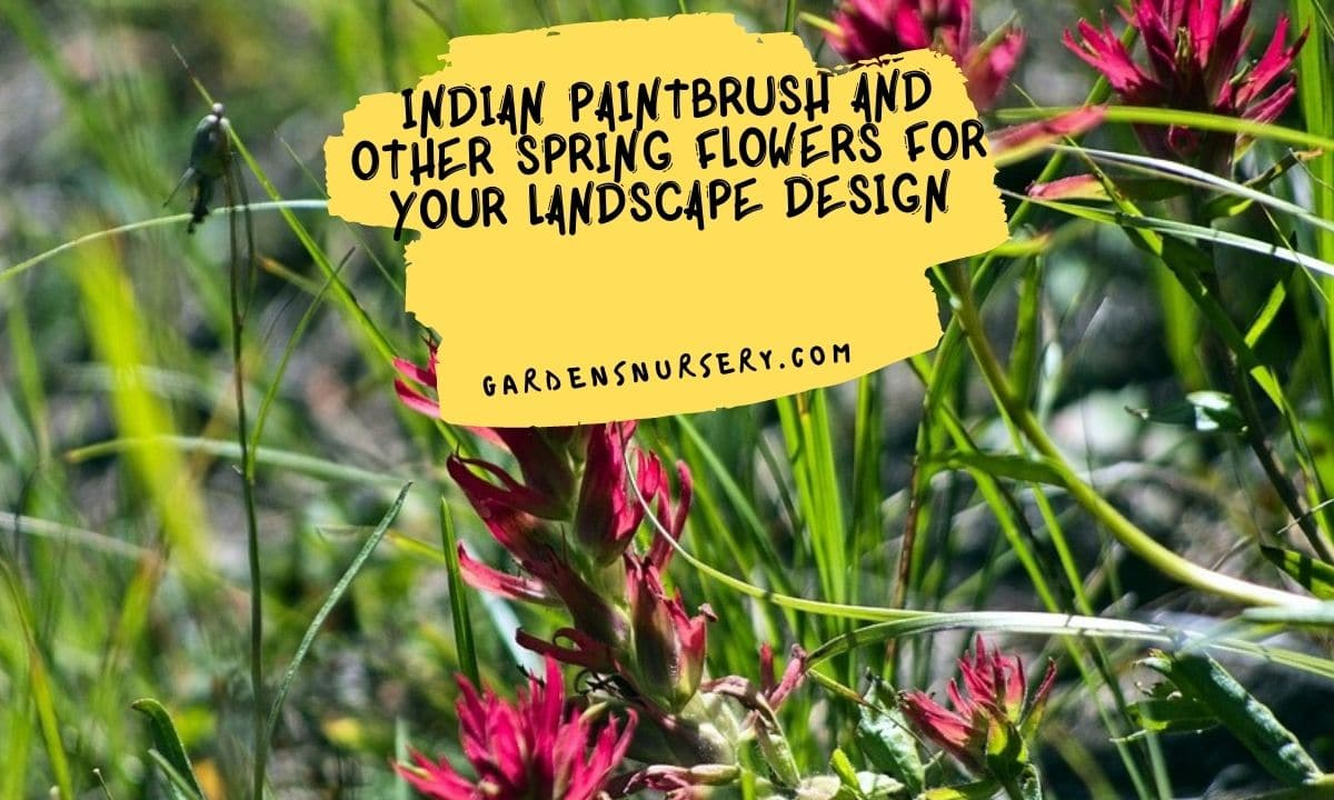 Indian Paintbrush And Other Spring Flowers For Your Landscape Design
