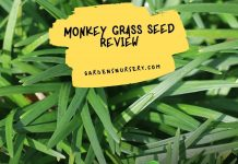 Monkey Grass Seed Review