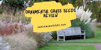 Ornamental Grass Seeds Review