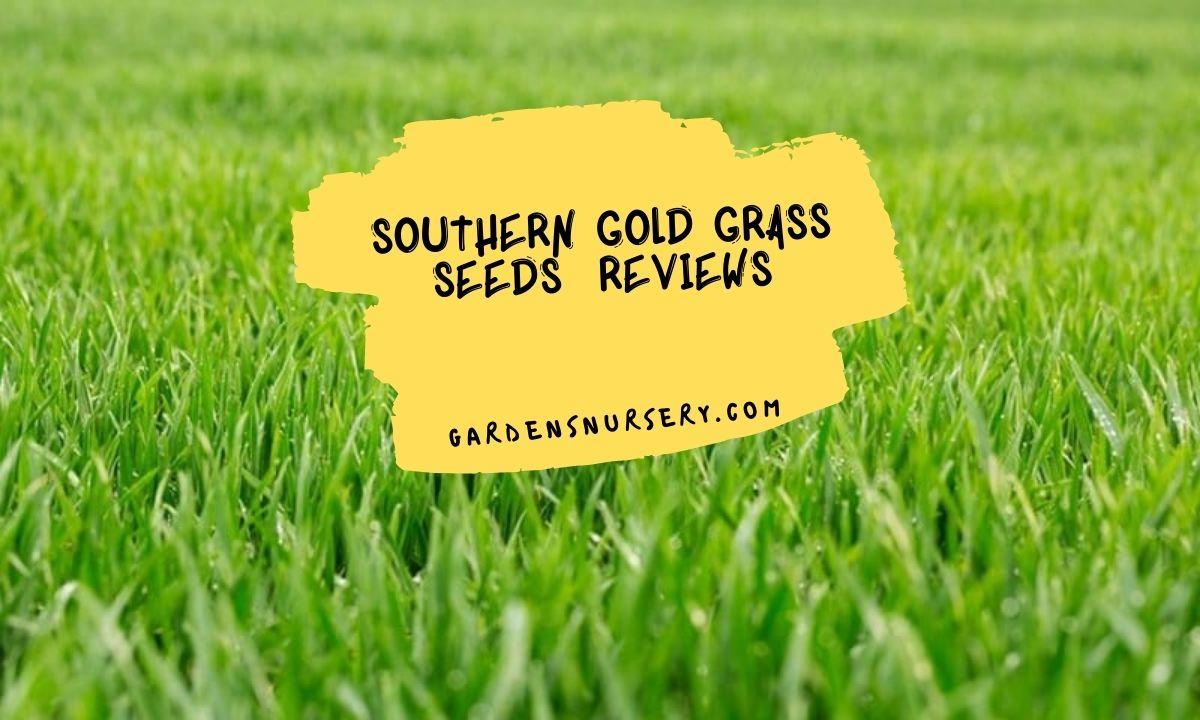 Southern Gold Grass Seeds Reviews