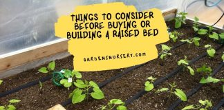 Things To Consider Before Buying Or Building A Raised Bed