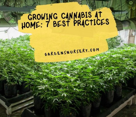 Growing Cannabis At Home 7 Best Practices