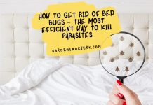 How To Get Rid Of Bed Bugs – The Most Efficient Way To Kill Parasites