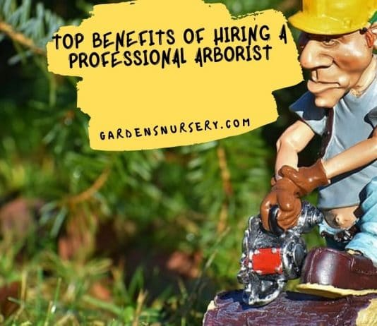 Top Benefits of Hiring a Professional Arborist