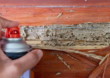 Use A Termite Spray