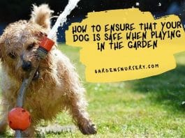 How To Ensure That Your Dog Is Safe When Playing In The Garden