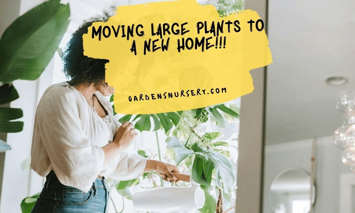 Moving Large Plants To A New Home!!!